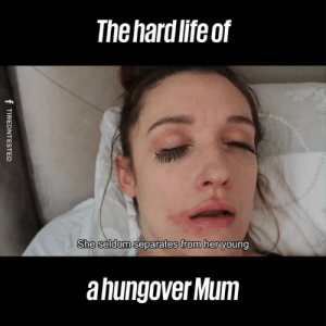 Dank, Life, and Been: The hard life of  She seldom separates from her  She seldom separates from her young  a hungover Mum We've all been here, right mums?! 😂😂