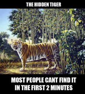 Tumblr, Blog, and Http: THE HIDDEN TIGER  MOST PEOPLE CANT FIND IT  IN THE FIRST 2 MINUTES srsfunny:Find The Hidden Tiger