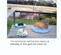 Deer, Dog, and Him: The homeowner said the buck shows up  everyday, so they gave him a bed, too. The deer has its own dog bed.