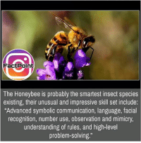 """And they're useful for us 🐝 did you know fact point , education amazing dyk unknown facts daily facts💯 didyouknow follow follow4follow earth science commonsense f4f factpoint instafact awesome world worldfacts like like4ike tag friends Don't forget to tag your friends 👍: The Honeybee is probably the smartest insect species  existing, their unusual and impressive skill set include:  """"Advanced symbolic communication, language, facial  recognition, number use, observation and mimicry  understanding of rules, and high-level  problem-solving."""" And they're useful for us 🐝 did you know fact point , education amazing dyk unknown facts daily facts💯 didyouknow follow follow4follow earth science commonsense f4f factpoint instafact awesome world worldfacts like like4ike tag friends Don't forget to tag your friends 👍"""
