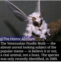 Memes, 🤖, and Unreal: @The Horror Account  The Venezuelan Poodle Moth the  almost unreal looking subject of the  popular meme  is believe it or not,  a real animal, not a hoax. The species  was only recently identified, in 2009 I just realized I haven't posted a video in a while! Should I post a scary one?