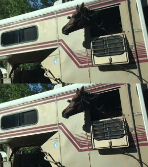 The horse we passed having the best day ever!: The horse we passed having the best day ever!