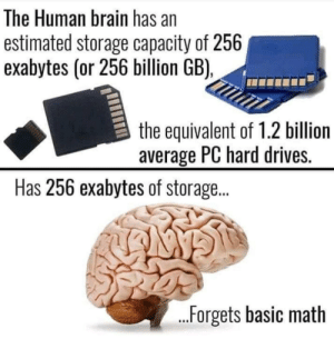 Brain, Math, and Relatable: The Human brain has an  estimated storage capacity of 256  exabytes (or 256 billion GB),  the equivalent of 1.2 billion  average PC hard drives.  Has 256 exabytes of storage...  ...Forgets basic math Ah relatable