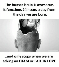 Fall, Love, and Memes: The human brain is awesome.  It functions 24 hours a day from  the day we are born.  ..and only stops when we are  taking an EXAM or FALL IN LOVE