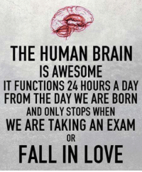 fall in love: THE HUMAN BRAIN  IS AWESOME  IT FUNCTIONS 24 HOURS A DAY  FROM THE DAY WE ARE BORN  AND ONLY STOPS WHEN  WE ARE TAKING AN EXAM  OR  FALL IN LOVE