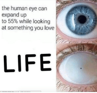 human eyes: the human eye can  expand up  to 55% while looking  at something you love  LIFE