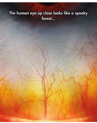- Good morning! Thankful it's the weekend😍 scarystories: The human eye up close looks like a spooky  forest... - Good morning! Thankful it's the weekend😍 scarystories