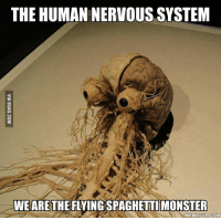 nervous: THE HUMAN NERVOUS SYSTEM  WE ARE THE FLYINGSPAGHETTI MONSTER  MEME FUL COM