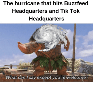 It will be a very happy day when this happens via /r/memes https://ift.tt/2IIN6Cs: The hurricane that hits Buzzfeed  Headquarters and Tik loK  Headquarters  What can l sav excepot vou re welcome! It will be a very happy day when this happens via /r/memes https://ift.tt/2IIN6Cs