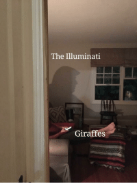 The Illuminati  Giraffes