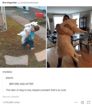 Before and afteromg-humor.tumblr.com: the-imgurian sarahsarahpearl  crydaisy:  blshiit:  BEFORE AND AFTER  The ratio of dog to boy stayed constant that's so cute  Source: x6sad9  1,078,258 notes Before and afteromg-humor.tumblr.com