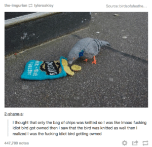 Fucking, Saw, and Idiot: the-imgurian tyleroakley  Source: birdsofafeathe...  2-shane-s:  I thought that only the bag of chips was knitted so I was like Imaoo fucking  idiot bird got owned then I saw that the bird was knitted as well then I  realized I was the fucking idiot bird getting owned  447,780 notes