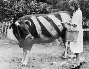 Zebra,  Invention, and The: The invention of the Zebra (1941)