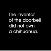 Or a poodle.: The inventor  of the doorbell  did not own  a chihuahua Or a poodle.