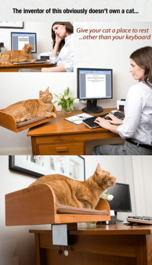 laughoutloud-club:  That's Not How Cats Work: The inventor of this obviously doesn't own a cat...  Give your cat a place to rest  ..other than your keyboard laughoutloud-club:  That's Not How Cats Work