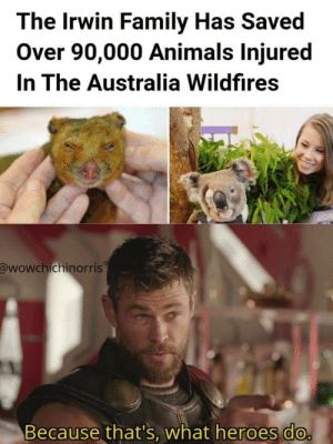 awesomacious:  Not all hero's wear capes: The Irwin Family Has Saved  Over 90,000 Animals Injured  In The Australia Wildfires  @wowchichinorris  Because that's, what heroes do. awesomacious:  Not all hero's wear capes