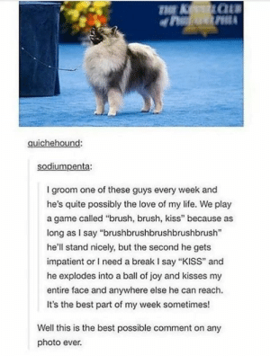 "Brush, Brush, Kiss via /r/wholesomememes https://ift.tt/2Z5LbTh: THE K CU#  quichehound:  sodiumpenta:  I groom one of these guys every week and  he's quite possibly the love of my life. We play  a game called ""brush, brush, kiss"" because as  long as I say ""brushbrushbrushbrushbrush""  he'll stand nicely, but the second he gets  impatient or I need a break I say ""KISS"" and  he explodes into a ball of joy and kisses my  entire face and anywhere else he can reach.  It's the best part of my week sometimes!  Well this is the best possible comment on any  photo ever. Brush, Brush, Kiss via /r/wholesomememes https://ift.tt/2Z5LbTh"