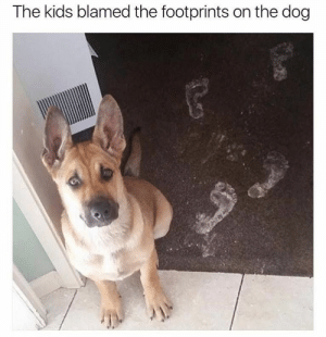 Animals, Funny, and Memes: The kids blamed the footprints on the dog 42 Funny Dog Memes That'll Make Your Day! - Lovely Animals World