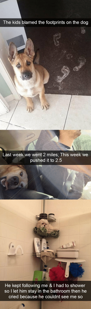 animalsnaps:More dog snaps: The kids blamed the footprints on the dog   Last week we went 2 miles; This week we  pushed it to 2.5   He kept following me & I had to shower  so I let him stay in the bathroom then he  cried because he couldnt see me SO animalsnaps:More dog snaps