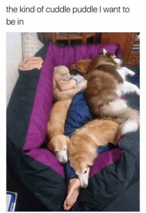 Send me there please: the kind of cuddle puddle I want to  be in Send me there please