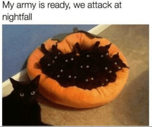 The kitten army: The kitten army