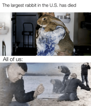 So long partner by Brendanlendan MORE MEMES: The largest rabbit in the U.S. has died  All of us: So long partner by Brendanlendan MORE MEMES