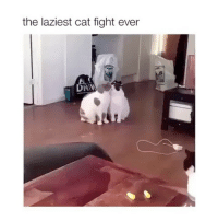 When you're mad, but not THAT mad. 😴: the laziest cat fight ever  6. When you're mad, but not THAT mad. 😴
