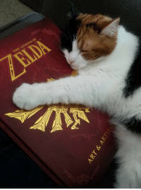 Target, Tumblr, and Blog: THE LEGEND OF catsuggest:  Gizmo suggest: hug booke
