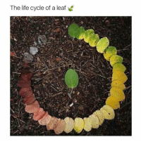 https://t.co/tnPnow1b2P: The life cycle of a leaf https://t.co/tnPnow1b2P