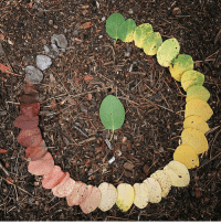 The life cycle of a leaf. Photo: robherr [Flickr] https://t.co/BwFjuDeUtt: The life cycle of a leaf. Photo: robherr [Flickr] https://t.co/BwFjuDeUtt
