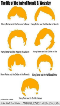 """<p>I think we can all agree that Goblet of Fire was the worst. <a href=""""http://ift.tt/1fmpvnQ"""">http://ift.tt/1fmpvnQ</a></p>: The lifte of the hair of Ronald B.Weasley  Harry Potter and the Sorcerer's Stone  Harry Potter and the Chamber of Secrets  Harry Potter and the Prisoner of zkan  arry Potter and the Goblet of Fire  Harry Potter and the Order of the Phoenix  Harry Potter and the Halif Blood Prince  padacodkles.tumblrHarry Pottrand the Deathly Hallows  Like this? You'll hate MUGGLENET MEMES.COM <p>I think we can all agree that Goblet of Fire was the worst. <a href=""""http://ift.tt/1fmpvnQ"""">http://ift.tt/1fmpvnQ</a></p>"""