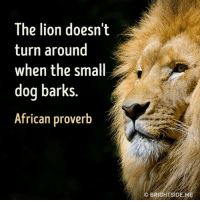 "In other words, ""don't feed the trolls."": The lion doesn't  turn around  when the small  dog barks.  African proverb  BRIGHTSIDEME In other words, ""don't feed the trolls."""