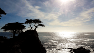 The, Lone, and Cypress: The lone cypress