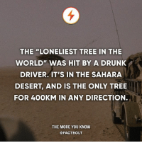 "RIP tree. It died. — Source: http:-www.smithsonianmag.com-smart-news-the-most-isolated-tree-in-the-world-was-killed-by-a-probably-drunk-driver-5369329-: THE ""LONELIEST TREE IN THE  WORLD"" WAS HIT BY A DRUNK  DRIVER. IT'S IN THE SAHARA  DESERT, AND IS THE ONLY TREE  FOR 40OKM IN ANY DIRECTION.  THE MORE YOU KNOW  @FACTBOLT RIP tree. It died. — Source: http:-www.smithsonianmag.com-smart-news-the-most-isolated-tree-in-the-world-was-killed-by-a-probably-drunk-driver-5369329-"