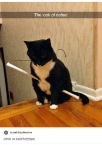 Humans of Tumblr, Looking, and Defeat: The look of defeat  to  tastefully offensive  (photo via batterfluffyflaps)
