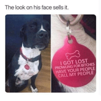 Coolest Dog Ever: The look on his face sells it.  I GOT LOST  PROWLING FOR BITCHES  HAVE YOUR PEOPLE  CALL MY PEOPLE Coolest Dog Ever