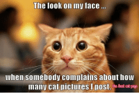 Memes, Pictures, and My Face When: The look on my face..  when somebody complains about how  many cat pictures l pos :)