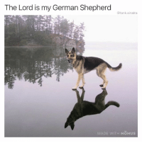 Funny, God, and German Shepherd: The Lord is my German Shepherd  @tank.sinatra  MADE WITH MOMUS Dog is god spelled reversewards