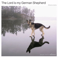 Funny, God, and German Shepherd: The Lord is my German Shepherd  @tank.sinatra  MADE WITH MOMUS Dog is God spelled incorrectly 🙏🏼