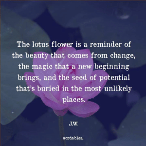 Too often, we forget to look at ourselves this way...: The lotus flower is a reminder of  the beauty that comes from change,  the magic that a new beginning  brings, and the seed of potential  that's buried in the most unlikely  places.  wordables. Too often, we forget to look at ourselves this way...
