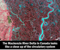Memes, Delta, and 🤖: The Mackenzie River Delta in Canada looks  like a close up of the circulatory system natureisbeautiful 👏 For colouring, the R-G-B channels are NIR-R-G. (Image via @reddit)