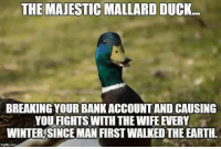 Mallard: THE MAJESTIC MALLARD DUCK  BREAKING YOUR BANKACCOUNT AND CAUSING  YOU FIGHTS WITH THE WIFE EVERY  WINTER SINCE MAN FIRST WALKED THE EARTH.