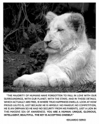 """One of my most favorite quotes from Eduardo. I like to read this from time to time. So meaningful. @blackjaguarwhitetiger blackjaguarwhitetiger papabearchronicles ItsAllForLove babyjuliobjwt BeHuman: """"THE MAJORITY OF HUMANS HAVE FORGOTTEN TO FALL IN LOVE WITH OUR  SURROUNDINGS, WITH OUR PLANET, WITH THE STARS. AND IN THOSE DETAILS,  WHICH ACTUALLY ARE FREE, IS WHERE TRUE HAPPINESS DWELLS. LOOKAT HOW  PROUD JULITOIS, JUST BECAUSE HE IS HIMSELF. NO MAKEUP NO COMPETITION,  HE IS AN ORPHAN SO HE HAD NO SECURITY FROM HIS PARENTS, JUST A LION IN  THIS MASSIVE SEA OF AwARENESS. YOU ARE A HUMAN: UNIQUE, GLORIOUS,  INTELLIGENT, BEAUTIFUL. THE KEY IS ACCEPTING ONESELF.""""  EDUARDO SERIO One of my most favorite quotes from Eduardo. I like to read this from time to time. So meaningful. @blackjaguarwhitetiger blackjaguarwhitetiger papabearchronicles ItsAllForLove babyjuliobjwt BeHuman"""