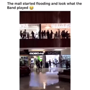 Love, Saw, and Target: The mall started flooding and look what the  Band played  BrDLCo SH  ONL  MOBO shop 900 rosegold-moonlight: rogue-snorunt: They saw their chance and by George they took it  I love my city