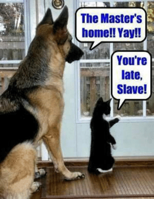 awesomesthesia:  How Our Pets See Us: The Master's  home!! Yay!!  Youre  late,  Slave! awesomesthesia:  How Our Pets See Us