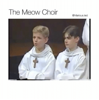 Funny, Ted, and Hilarious: The Meow Choir anavioas1aco  @hilarious.ted Someone should play this at my funeral (@hilarious.ted)