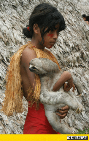 laughoutloud-club:  An Amazonian Girl and Her Pet Sloth: THE META PICTURE laughoutloud-club:  An Amazonian Girl and Her Pet Sloth