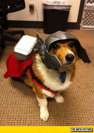 Tumblr, Blog, and Net: THE META PICTURE srsfunny:  Oh Hi, My Name Is Thorgi