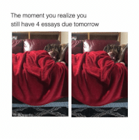 Memes, School, and Tomorrow: The moment you realize you  still have 4 essays due tomorrow  IG acomediic I hate school 🤷‍♂️ follow @comediic (me) for more memes like this ✨✨