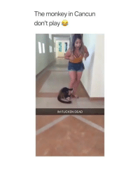 Bad, Cancun, and Monkey: The monkey in Cancun  don't play  IM FUCKEN DEAD did anyone else feel bad when they ran away from the monkey? ):